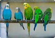 продаются попугаи разных видов